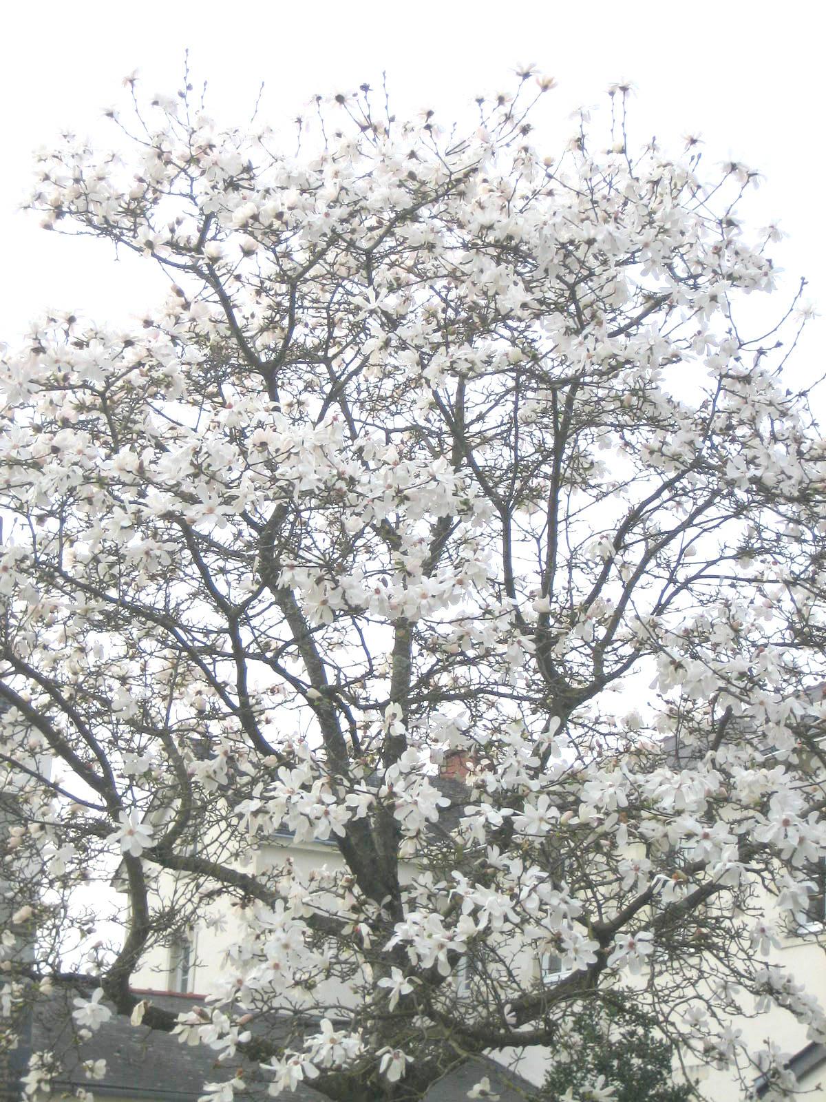primavera (4)1